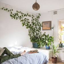 30 Plant Instagram Accounts for Décor Inspiration in 2019 — The ...