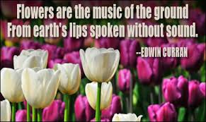 The Beauty Of Flowers Quotes Best Of Flower Quotes