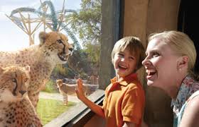 busch gardens tampa vacation packages. book an kids free vacation package at busch gardens tampa bay packages