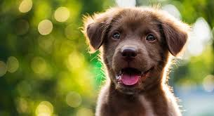 brown dog names find the perfect name