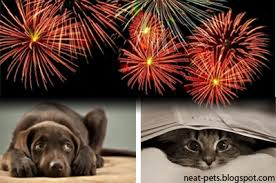 Image result for firework night pictures of dogs/cats