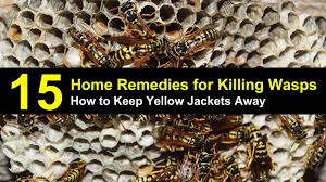 How to Keep Yellow Jackets Away from Your Home - 15 Home Remedies ...