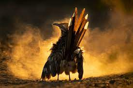 2021 Audubon Photography Awards