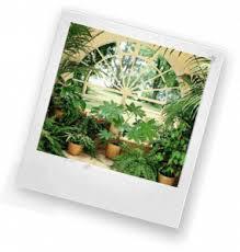 Комнатные растения в интерьере квартиры реферат в качестве мини  Комнатные растения в интерьере квартиры варианты размещения