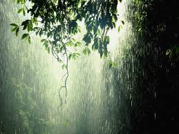 tropical rainforest raining. Brilliant Tropical Rainforests Are Extremely Important Because The Water They Produce Is  Evaporated And Then Used As Rain In Other Areas With Tropical Rainforest Raining E
