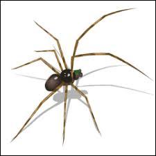 Spider Identification Chart Australia Fumapest Pest Control Spider Identfication Chart