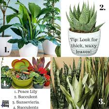 house plants for high altitude homes from albuquerque mom s blog