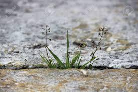 """Résultat de recherche d'images pour """"herbe entre les dalles"""""""