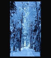 frozen forest hd mobile wallpaper