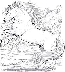 Cavallo6 Disegni Da Colorare Per Adulti Disegni Da Colorare