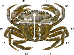 Crab Species Chart Figure 5 From Carcinus Maenas A Demographic Study Of An