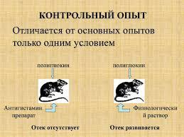 Патофизиология Вводная лекция презентация онлайн  КОНТРОЛЬНЫЙ ОПЫТ
