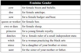 Genders Of Nouns Feminine