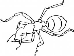 Small Picture Ant Coloring Pages Ant Coloring Pages For Coloring With Ant