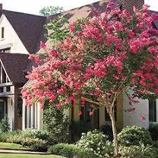 ... Best Trees To Plant In Front Yard 12 Archived News ...