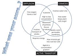 Active Vs Passive Transport Venn Diagram Active And Passive Transport Worksheet Sanfranciscolife