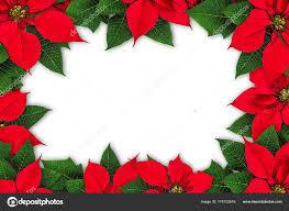 Weihnachtsstern Blume Frame Stockfoto Agcuesta1 174723016