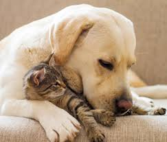 dog and cat love each other. Plain Other Dog And Cat Intended And Love Each Other D