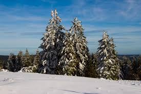 Výsledek obrázku pro vánoční les