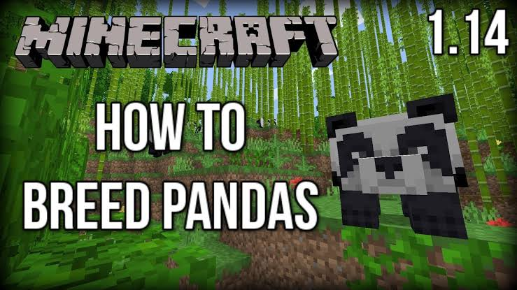 Minecraft Breeding Pandas