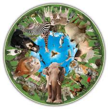 round table puzzle animal arena a broader view
