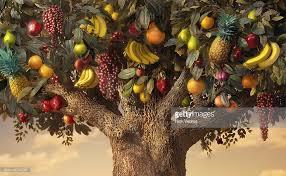 Tree Bearing Many Kinds Of Fruit Stock Photo  Getty ImagesTree Bearing Fruit