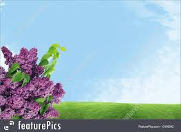 Lilacs In Landscape Design Flowers Lilacs Stock Picture I3156042 At Featurepics