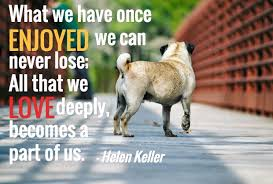 Best 40 Dog Death Quotes Ideas Dog Loss Quotes Death Of Dog Impressive Dog Death Quotes