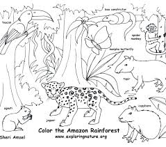 Rustic Coloring Pages Forest B5658 Various Rainforest Animals