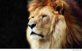 Lion Wallpaper Hd 1080p Free Download ...