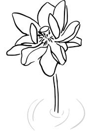 Lotus Illustratie Kleurplaat Gratis Kleurplaten Printen