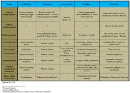 Spinal Tracts Table The Descending Tracts Of The Spinal