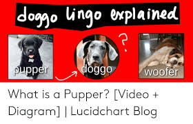Doggo Ingo Explained Doggo Puppe Woofer What Is A Pupper