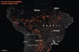 Is Amazon Rainforest Burning At Record Rates What Is The