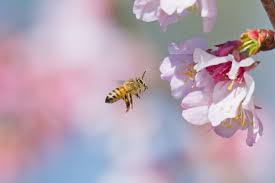 Adverse Reactions to Taking Propolis | LIVESTRONG.COM