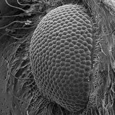 Scanning Electron Microscopy Liverpool Museums