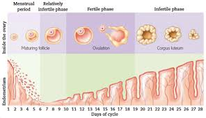 Pregnancy Day By Day Chart Pregnancy Day By Day Welcome To Your First Trimester Part 2