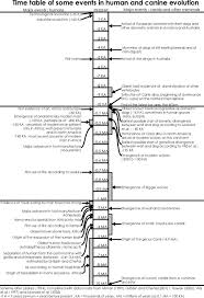 Canine Evolution Chart Triton World Time Table Of Some Events In Human And Canine