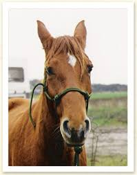 gelenkentzündung pferd homöopathie