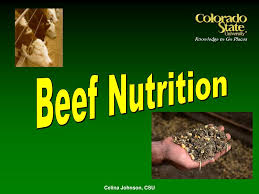 PPT - Beef Nutrition PowerPoint Presentation, free download - ID:211306