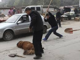 Tibetan Mastiffs Abandoned By Rich Chinese Thousands Of