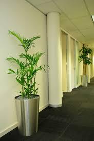 best indoor plants for office. Bonita Plants Landscapes Garden Maintenance Indoor Plant Best For Office