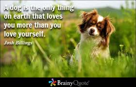 Pet Quotes Enchanting Download Quotes About Pets And Friendship Ryancowan Quotes