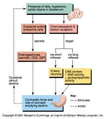 Ch23 Regulation Of Digestion