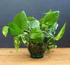 grow indoor plants in glass bottles apieceofrainbow 12