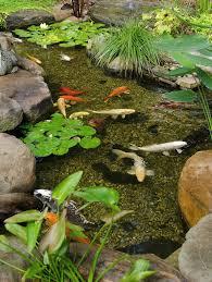 Small Picture 140 best Garden Ponds images on Pinterest Pond ideas Garden