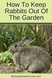 learn how to keep rabbits out of the garden and keep your backyard plants safe with