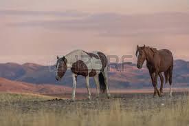 wild horses sunset. Wonderful Horses Stock Photo  Wild Horses At Sunset In