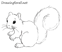 Small Picture How to Draw a Squirrel DrawingForAllnet
