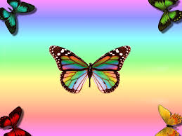 most beautiful butterflies in the world animated. Fine Butterflies Rainbow Wallpapers Beautiful Butterfly Intended Most Butterflies In The World Animated F